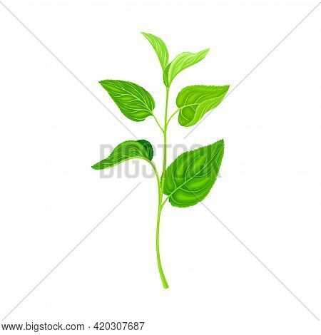 Green Leafy Stem Or Stalk With Foliage And Veins Vector Illustration