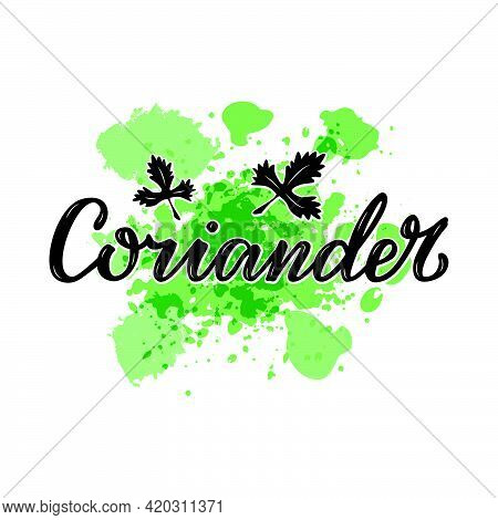 Vector Illustration Of Coriander Lettering For Packages, Product Design, Banners, Stickers, Spice Sh