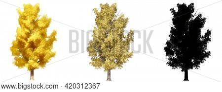 Set or collection of Elm Stocky trees, painted, natural and as a black silhouette on white background. Concept or conceptual 3d illustration for nature, ecology and conservation, strength or endurance