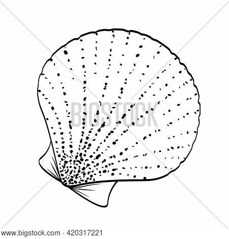 Bivalve Shell Sea Scallop On White Background. Black Outline Hand Drawn Sketch With Dotted Texture,