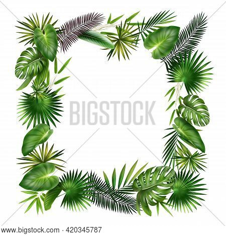 Vector Frame From Green, Violet Tropical Plants Palm, Fern, Bamboo And Monstera Leaves Isolated On W