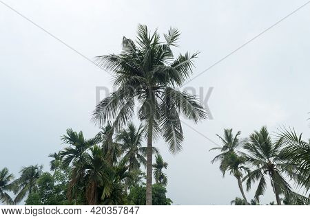 Calm Before The Storm Atmospheric Mood In Tropical Climate. The Unusual Tranquility And Stability On