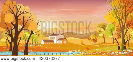 Autumn Landscapes Of Countryside With Sunset And Purple Sky,panoramic Of Mid Autumn With Farm Field,