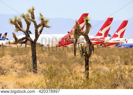 May 12, 2021 In Victorville, Ca:  Qantas A380 Aircraft Stored On The Tarmac Surrounded By Joshua Tre