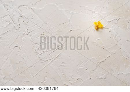 Fading Old Yellow Bright Autumn Fall Flower On A Cement Pattern Grunge Rough Plastered Wall Texture