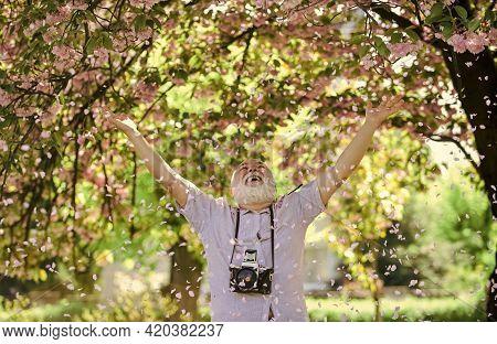 Male Photographer Enjoy Cherry Blossom. Travel And Walking In Cherry Blossom Park. Hobby At Retireme