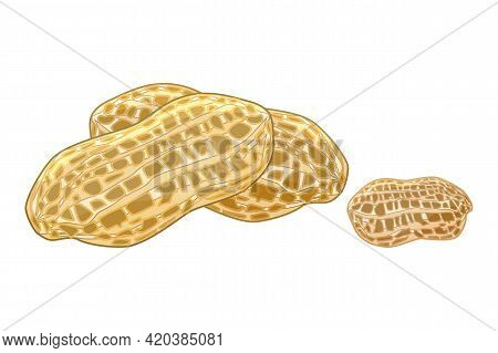Peanut Isolated On White Background. Pignut With Nutshell. Tasty Nut Icon. Peanuts In Cartoon Style