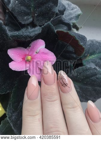 Nude Manicure On A Female Hand Against A Background Of Violets. Pink Violet With Drops