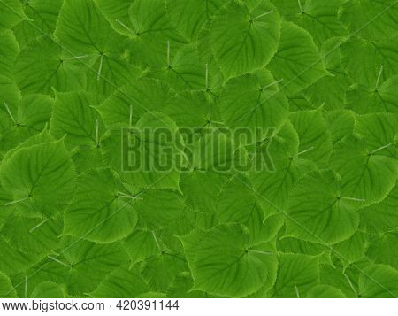 Green Leaves Seamless Pattern. Green Leaves Are Rounded, Overlapping. Seamless Natural Green Pattern