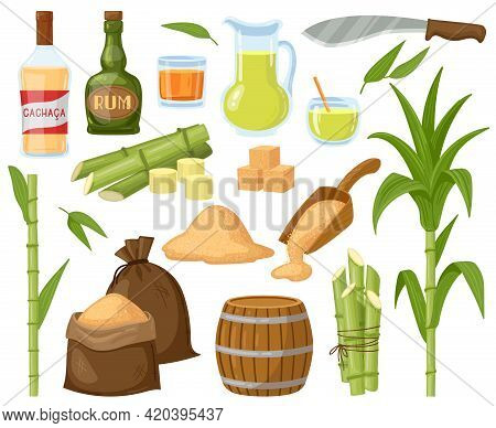 Cartoon Sugar Cane. Sugarcane Leaf Plants, Sugar Cubes, Granulated Sugar And Rum Alcoholic Liquid Ve