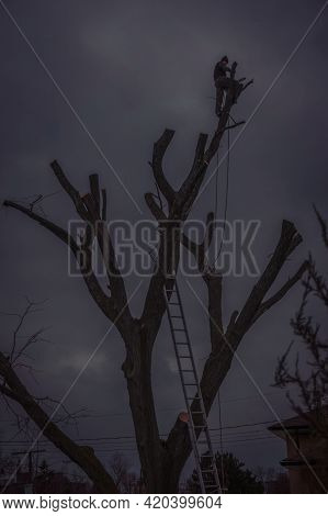 Toronto, Canada, December 2015 - Woodcutter On Top Of A Leafless Tree In Silhouette Against A Backgr
