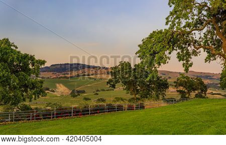 Landscape At A Vineyard In The Spring In Napa Valley, California, Usa
