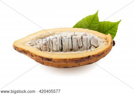 Cocoa Fruit, Raw Cacao Beans, Cocoa Pod. Fresh Cocoa Fruits Isolated On White Background With Clippi