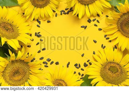 Beautiful Fresh Yellow Sunflower And Seeds On Yellow Background Flat Lay Top View Copy Space. Sunflo