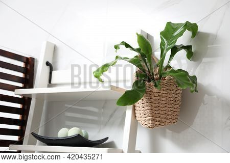 Beautiful Green Fern Hanging From Shelving Unit In Bathroom
