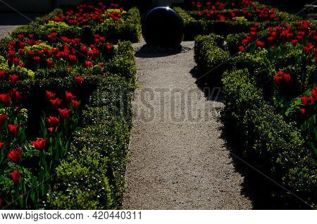 Architecture, Background, Beautiful, Beige, Bench, Blossom, Boxwood, Buxus Sempervirens, Composition