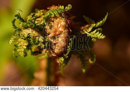 Vernal Brightly Green Fern Leaves In The Morning Glitter Background Sunlight