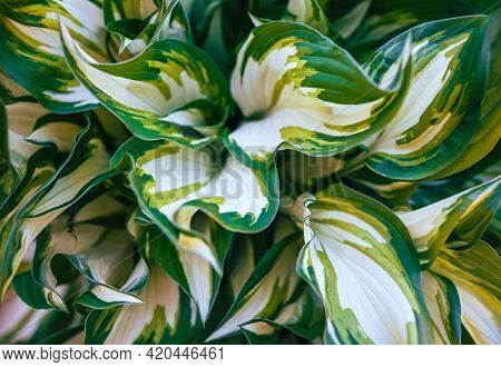 Close up of plant leaves nature background. Nature background of plant leaves. Plant leaves nature background. Nature. Close up background nature of green plant leaves. Nature background. Garden plants.