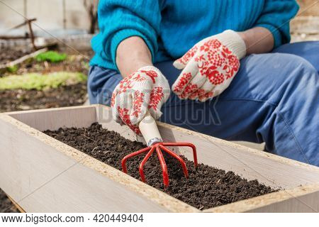 A Gardener Loosens The Soil In A Planting Box. The Woman Works In The Garden. Spring Or Summer Garde