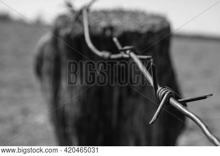 Barbed Wirebarbed Wire Close-up. International Day Of Remembrance Of The Slave Trade And The Concept