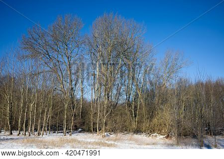 Dutch Forest Covered With Snow And In Sunshine During Wintertime