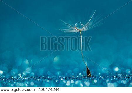 Macro Nature. Beautiful Dew Drops On Dandelion Seed Macro. Beautiful Soft Background. Water Drops On