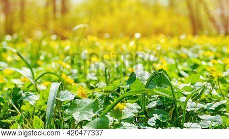 Summer Background With Blooming Flowers And Growing Grass With Flare.
