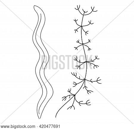 Set Of Algae, Vector Illustration. Seaweed Is Simple Isolated On A White Background In A Doodle Styl