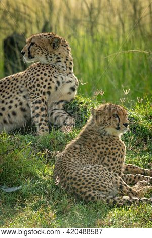 Close-up Of Cheetah Lying Down With Cub