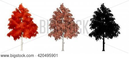 Set or collection of Black Gum trees, painted, natural and as a black silhouette on white background. Concept or conceptual 3d illustration for nature, ecology and conservation, strength or endurance