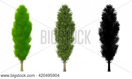 Set or collection of Black Poplar trees, painted, natural and as a black silhouette on white background. Concept or conceptual 3d illustration for nature, ecology conservation, strength or endurance