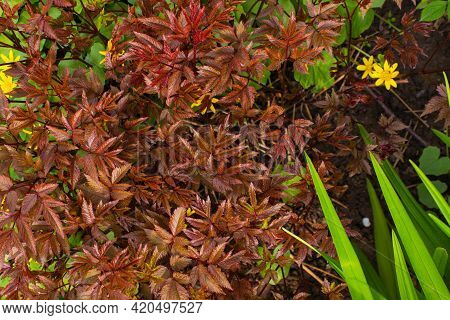 Forest Evergreen Flora Pink Flowers Blooming Among Green Moss. Shallow Depth Of Field.