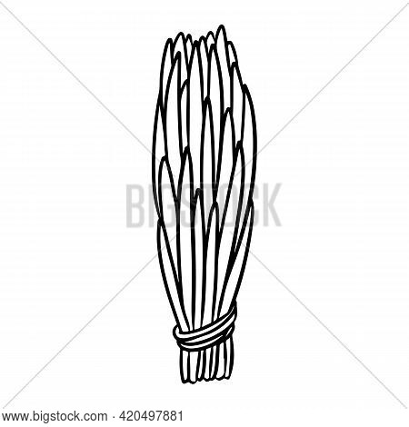 Cedar Smudge Stick Hand-drawn Doodle Isolated Icon. Vector Stock Plant Leaves Logo. Herb Bundle