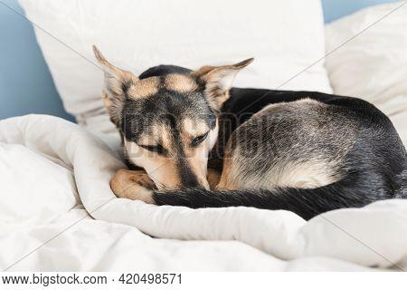 Cute Dog Lying On The Bed Sleeping