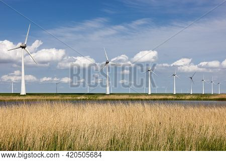 National Park With Canebrake, Lake And Wind Turbines In The Netherlands