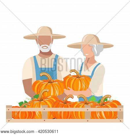 An Elderly Man And Woman In Work Clothes And Sunhat Harvest Pumpkins. Autumn Harvest Vector Illustra