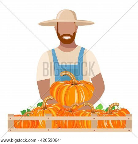 A Man In Work Clothes And A Sun Hat Harvests A Pumpkin. Autumn Harvest Vector Illustration On White