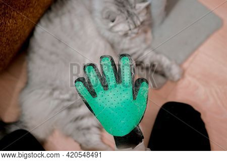 A Person Holds A Hand In Rubber Glove With Spikes With Cat Wool On The Background. Animal. Pet. Fluf
