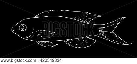 Pseudanthias.vector Of Pseudanthias Fish. Sea Bass Pseudanthias Fish Hand-drawn In Sketch Style Isol