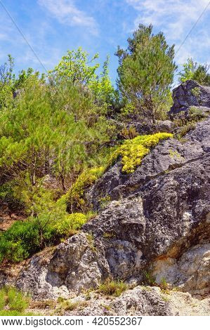 Spring In Mountains. Wildflowers And Trees On Stone Rock. Skadar Lake National Park, Montenegro