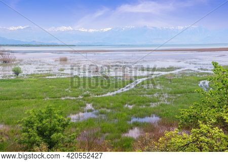 Beautiful Wetland Landscape On Sunny Spring Day.  Montenegro. National Park Lake Skadar. View Of Coa
