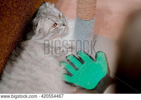 Cat Don't Want Be Comb By Green Glove. Combing Hair. Use. Kitten. Molting. Animal Care. Sad. Unhappy
