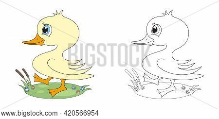 A Cute Duckling Walks On The Grass. Print For T-shirt.coloring.