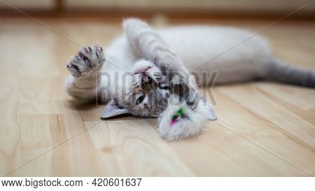 A Gray Cat Plays At Home And He Likes The Life Of A Cat, The Kitten's Blue Eyes, The Kitty Lies On T