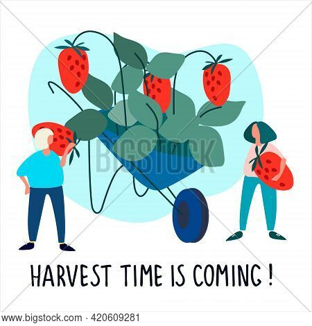 Women Picking Strawberries Vector Illustration. Harvest Time Is Coming Quote. Harvesting, Agritouris