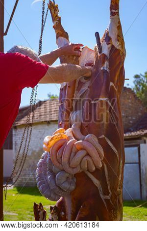 Butcher Removes The Intestines, Offal From The Pig's Entrails With A Knife And Puts Them In A Large