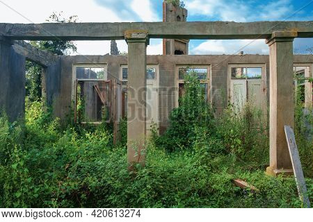 The Wall In The An Abandoned Wrecked House With Empty Windows And Doorway Overgrown With Green Ivy A