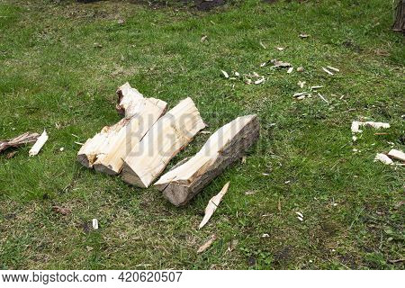 A Split Log And Splinters On The Grass In The Courtyard