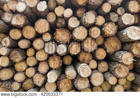Front View Of Cut Pine Logs, Texture Of Wood Logs, Freshly Cut Firewood Stacked With Resin Drips, Ho
