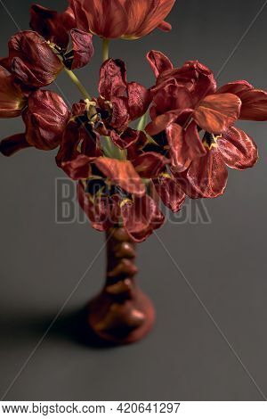 Flabby Red Tulips On A Black Background In A Vase Top View. The Concept Of Fragility And Rapid Death